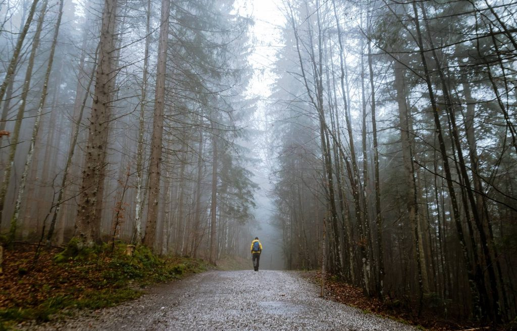 eager to be on the Camino de Santiago walk alone autumn mood forest cold countryside