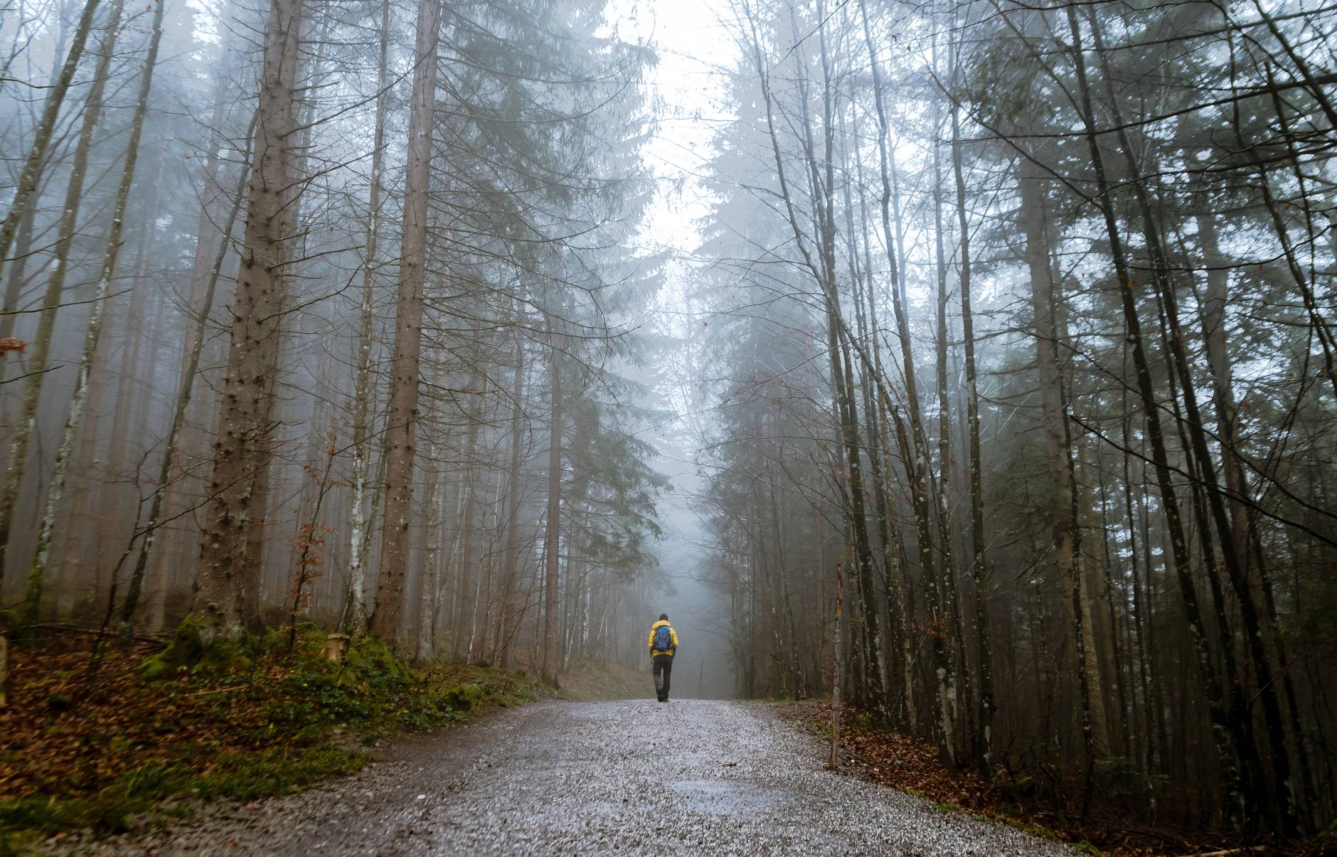 alone autumn mood forest cold countryside designed to walk backpack